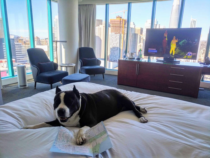 You can share your wall-to-wall views of San Francisco, from City Hall to the Transbay Tower (now known as the Salesforce Tower), with Fido at the pet-friendly Intercontinental SF © Becca Blond / Lonely Planet