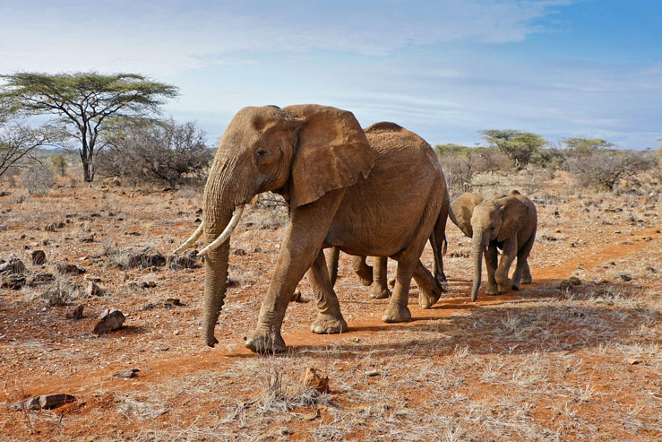 Kenya's wildlife is a major tourist draw ©MicheleB/Shutterstock