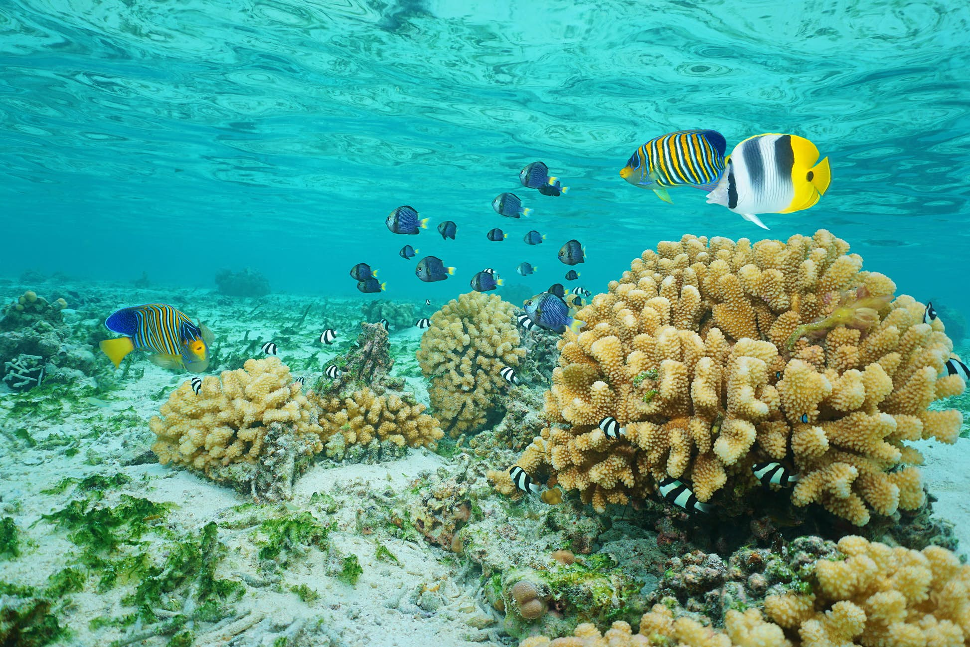 Fish inhabit the clear-water coral gardens that are excellent for snorkelling © Damsea/Shutterstock